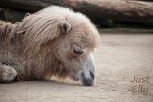 Zoo-03
