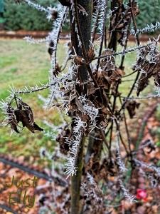 Hoar frost 1