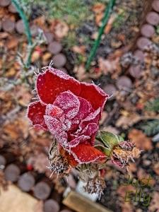 Hoar frost 2
