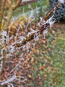 Hoar frost 3