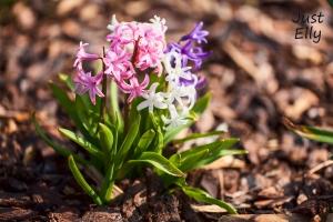 Springtime 01