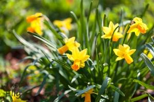 Springtime 04