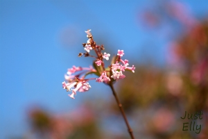 Springtime 06