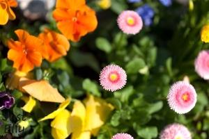 Springtime 07