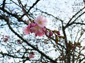 Spring 2020-01